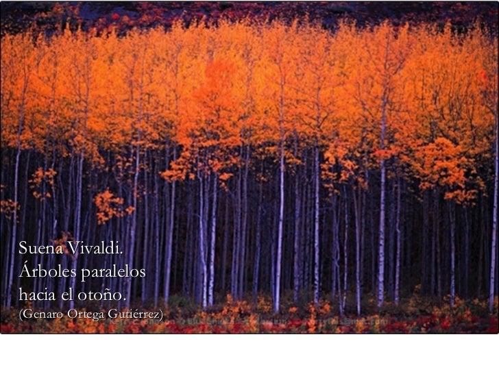 Suena Vivaldi. Árboles paralelos hacia el otoño. (Genaro Ortega Gutiérrez)