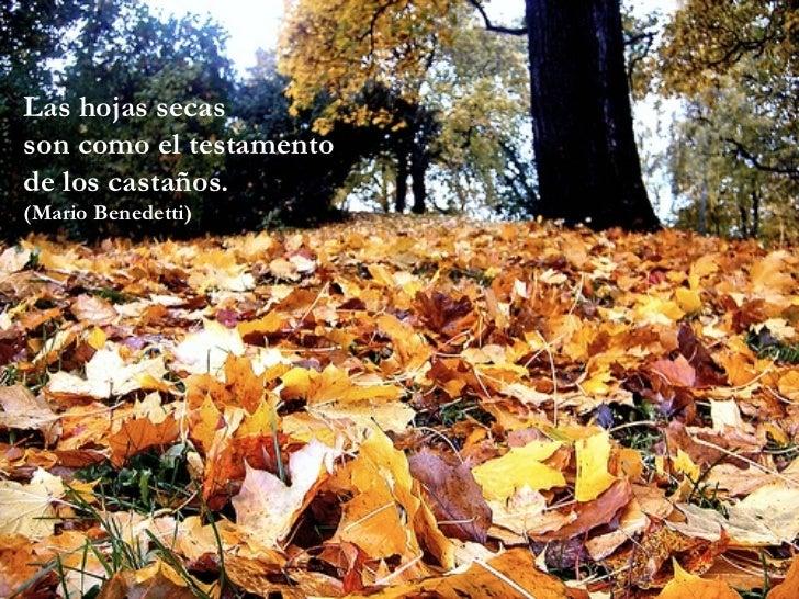 Las hojas secas son como el testamento de los castaños. (Mario Benedetti)