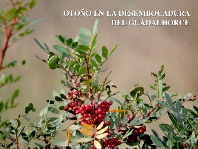 OTOÑO EN LA DESEMBOCADURA DEL GUADALHORCE