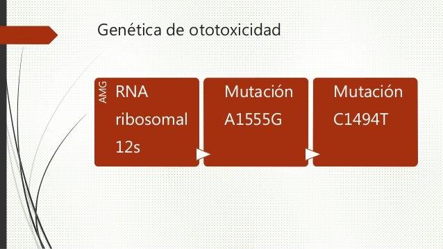 Genética de ototoxicidad AMG RNA ribosomal 12s Mutación A1555G Mutación C1494T