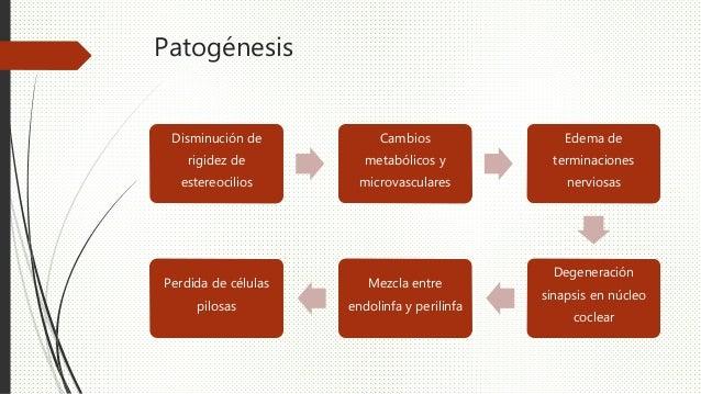 Patogénesis Disminución de rigidez de estereocilios Cambios metabólicos y microvasculares Edema de terminaciones nerviosas...