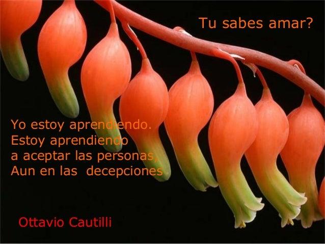 Yo estoy aprendiendo. Estoy aprendiendo a aceptar las personas, Aun en las decepciones Tu sabes amar? Ottavio Cautilli