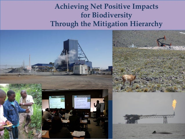 Achieving Net Positive Impacts for Biodiversity Through the Mitigation Hierarchy
