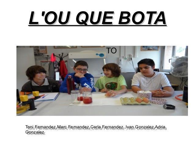 LOU QUE BOTA                                      TO                                            ++Toni Fernandez,Marc Fern...