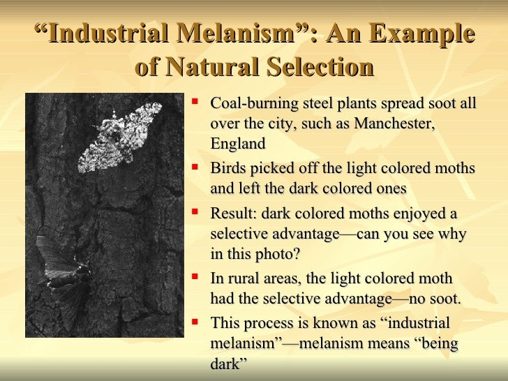 Industrial Melanism Is An Example Of Natural Selection