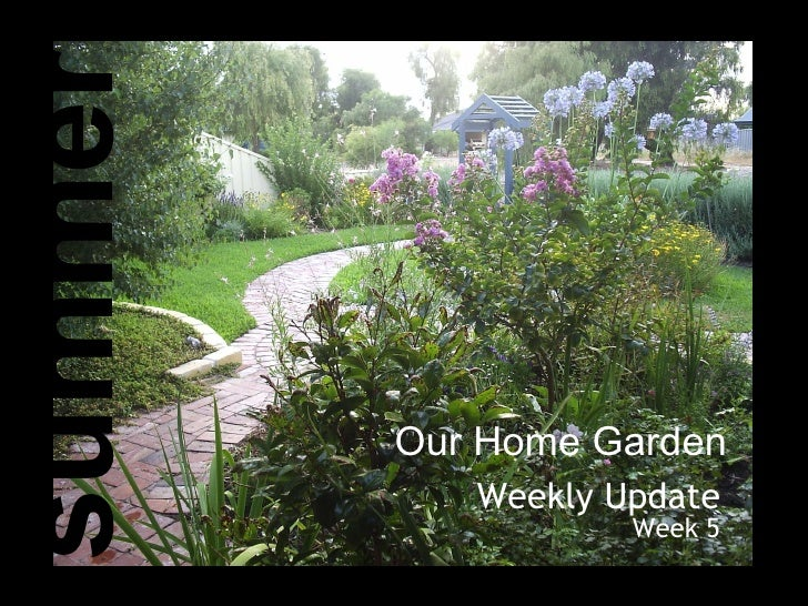 Our Home Garden Weekly Update Week 5 summer