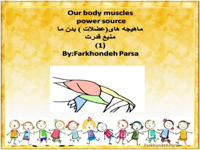 Our body muscles -1