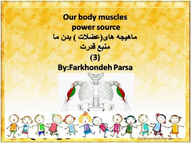 Our body muscles -3