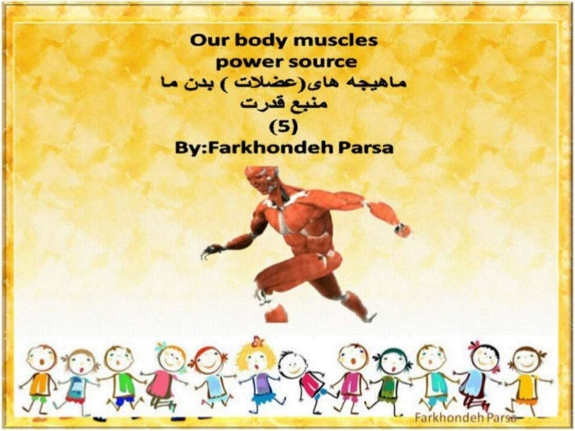 Our body muscles -5.