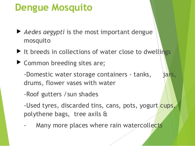 dengue fever presentation Abstract objectives: the aim of this study is to observe the clinical  presentation and frequency of dengue as a cause of fever in our setup  methods:.