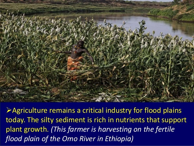 Agriculture remains a critical industry for flood plains today. The silty sediment is rich in nutrients that support plan...