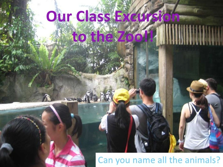 Our Class Excursion   to the Zoo!!       Can you name all the animals?
