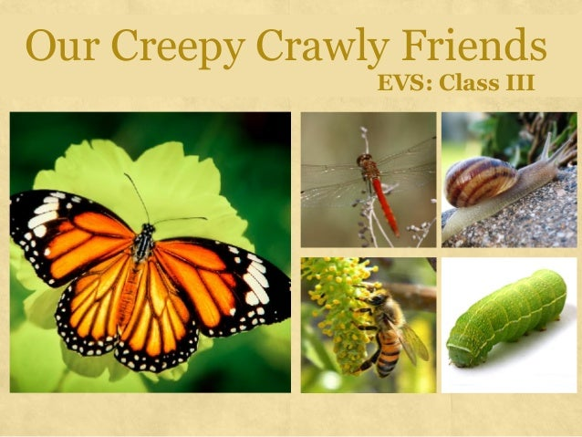 Our Creepy Crawly Friends  EVS: Class III