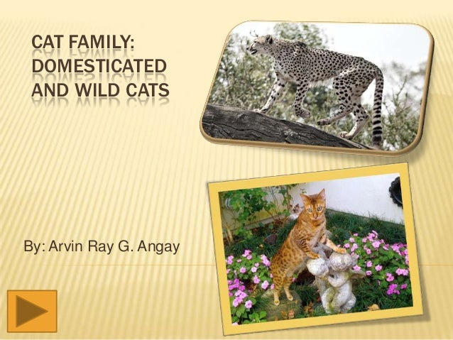 CAT FAMILY: DOMESTICATED AND WILD CATS  By: Arvin Ray G. Angay