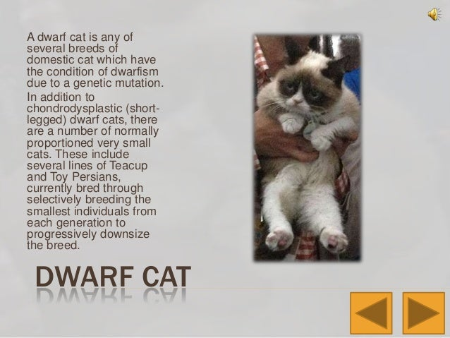 How Many Recognized Breeds Of Pedigree Cats Are There