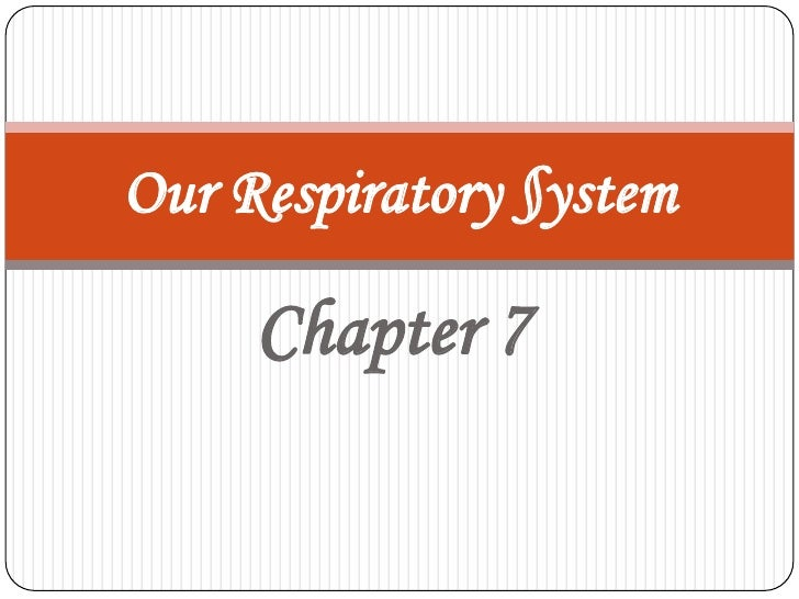 Chapter 7<br />Our Respiratory §ystem<br />