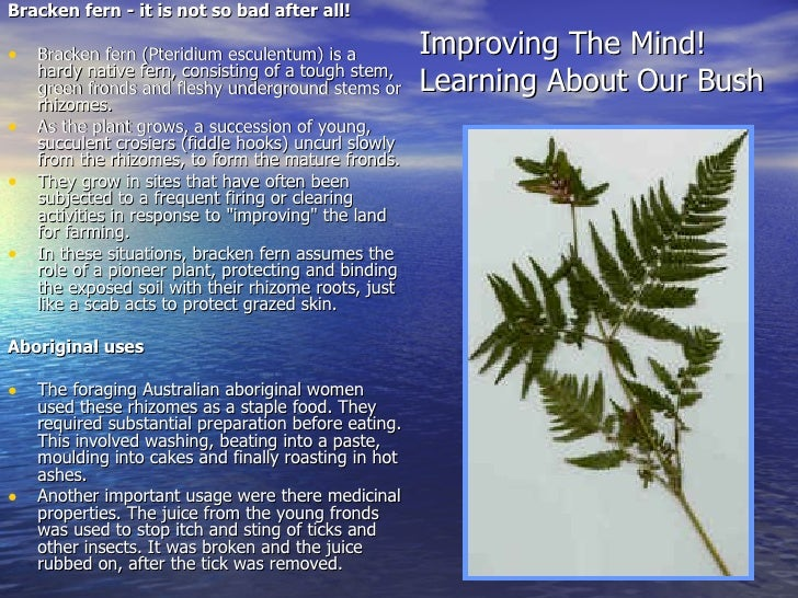 Improving The Mind! Learning About Our Bush <ul><li>Bracken fern - it is not so bad after all! </li></ul><ul><li>Bracken f...