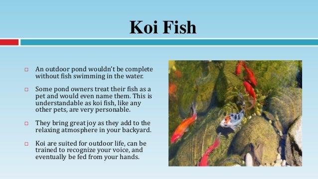 Outdoor pond essentials koi care and feeding tips for Outdoor fish pond care