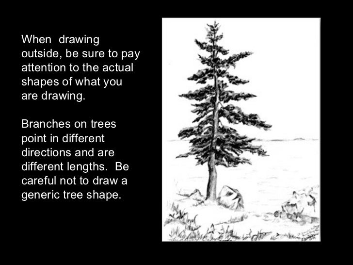 When  drawing outside, be sure to pay attention to the actual shapes of what you are drawing. Branches on trees point in d...