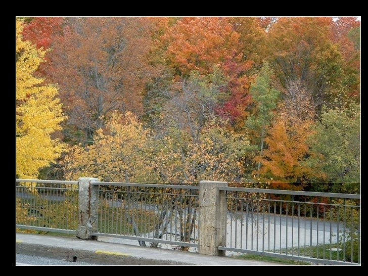 Outono Slide 3