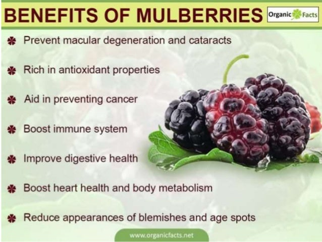 7ffde9fb71 Outstanding Health Benefits of mulberry fruit t fruit A series of Pr…