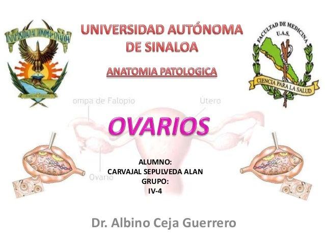 ALUMNO: CARVAJAL SEPULVEDA ALAN GRUPO: IV-4  Dr. Albino Ceja Guerrero