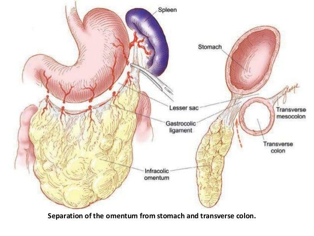 Ovary 1