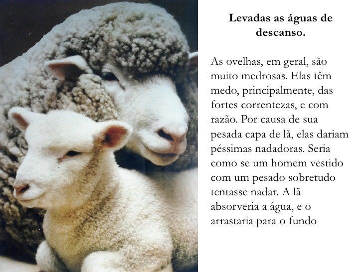 Levadas as águas de        descanso.  As ovelhas, em geral, são muito medrosas. Elas têm medo, principalmente, das fortes ...