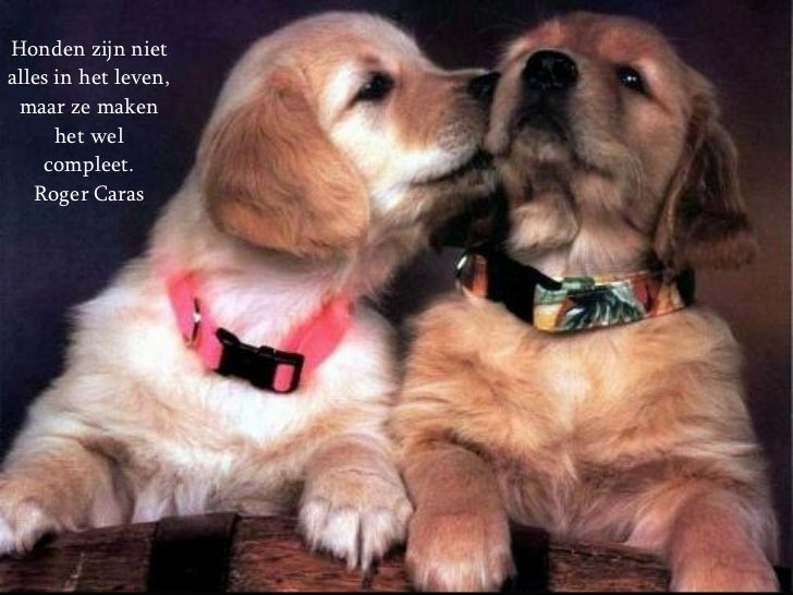 spreuken over dieren Over Honden En Mensen spreuken over dieren