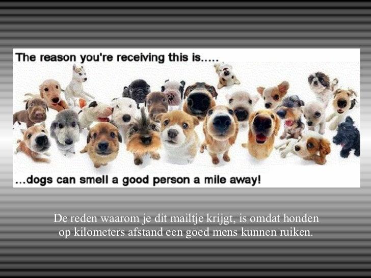Citaten Over Honden : Over honden en mensen