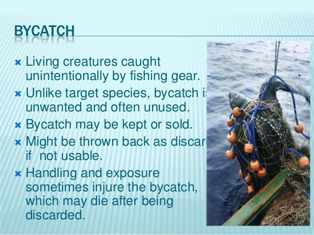 Over Fishing By Abdal Rahman Malik