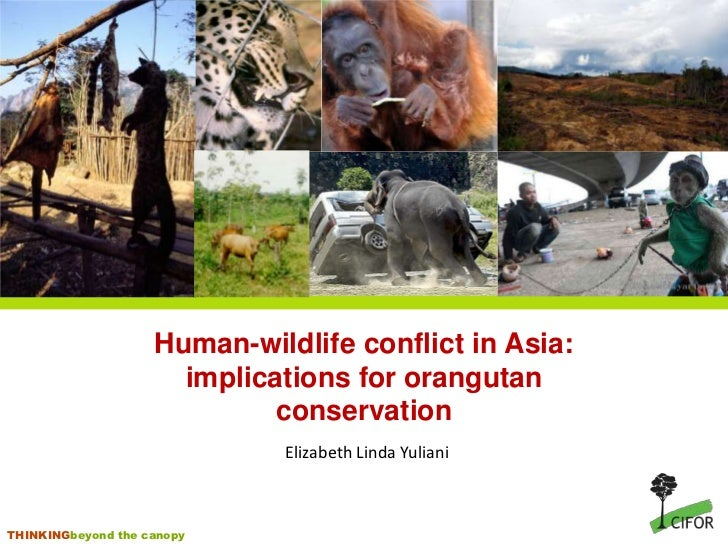 Human-wildlife conflict in Asia:                      implications for orangutan                             conservation ...