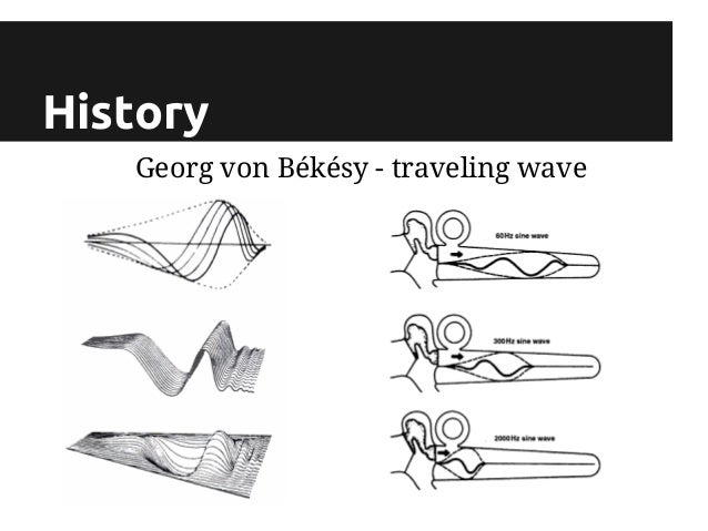 Von Bekesy S Traveling Wave Theory
