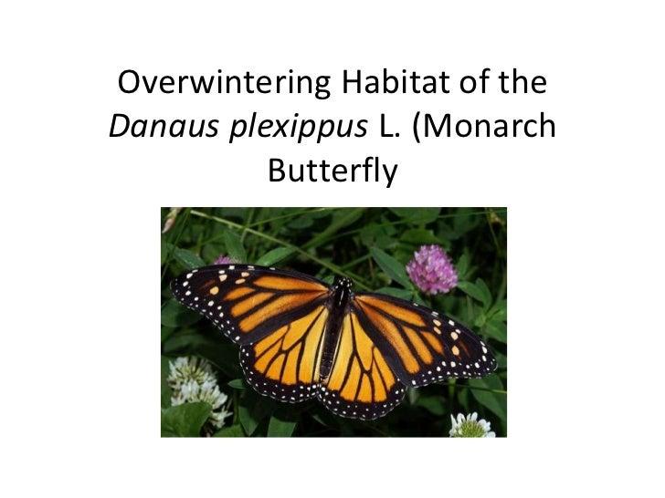 Overwintering Habitat of theDanaus plexippus L. (Monarch          Butterfly