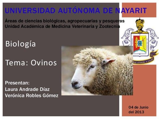 BiologíaTema: OvinosUNIVERSIDAD AUTÓNOMA DE NAYARITÁreas de ciencias biológicas, agropecuarias y pesquerasUnidad Académica...