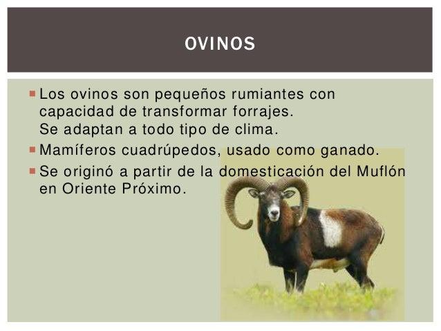 Generalidades de los Ovinos Slide 2