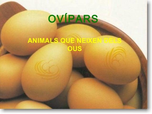 OVÍPARS ANIMALS QUE NEIXEN DELS OUS