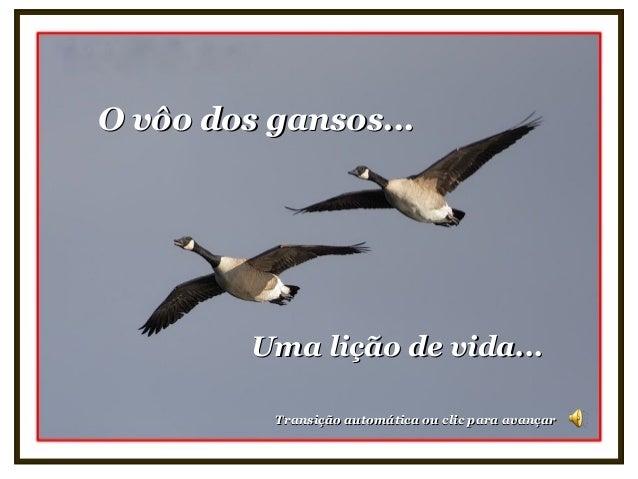 O vôo dos gansos...O vôo dos gansos... Uma lição de vida...Uma lição de vida... Transição automática ou clic para avançarT...