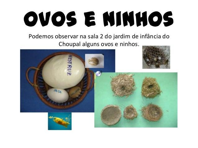 Ovos e ninhos Podemos observar na sala 2 do jardim de infância do Choupal alguns ovos e ninhos.