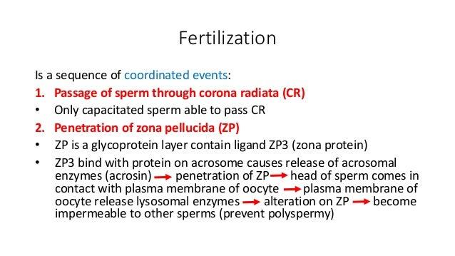 Ovulation, fertilizati...
