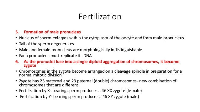 conception and implantation