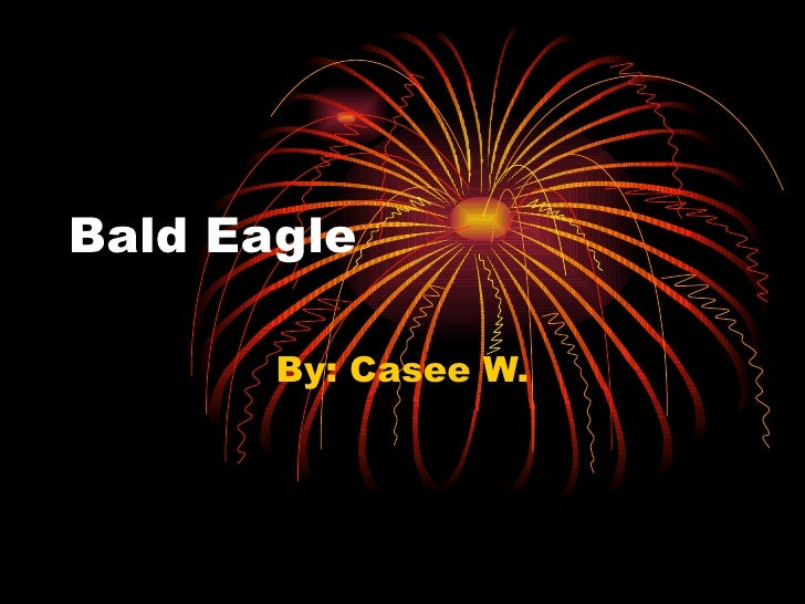 Bald Eagle By: Casee W.