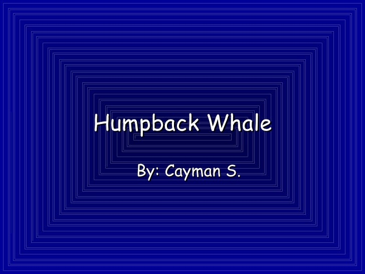 Humpback Whale By: Cayman S.