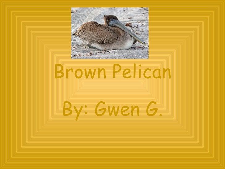 Brown Pelican By: Gwen G.