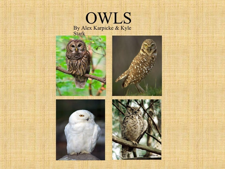 OWLS By Alex Karpicke & Kyle Stark