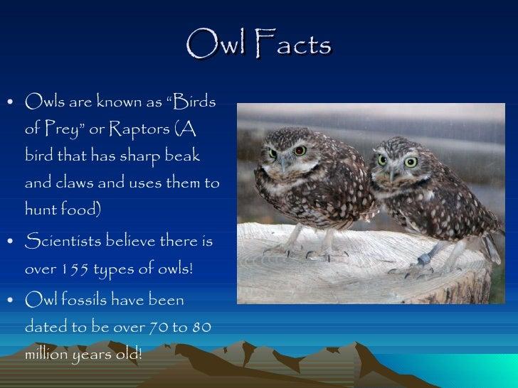 Owl Facts For Kids Ks1 | Kids Matttroy