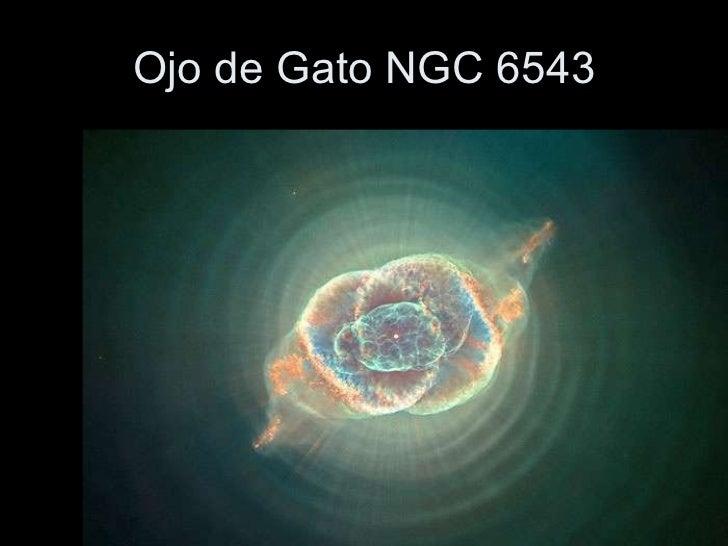 Resultado de imagen para GATO 6543