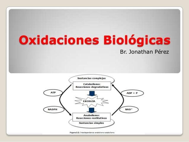 Oxidaciones BiológicasBr. Jonathan Pérez