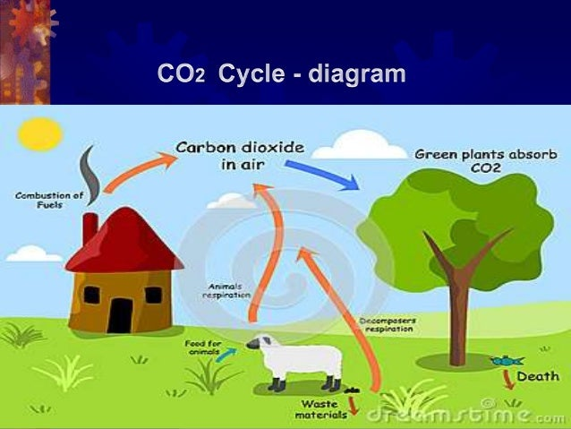 Oxygen co2 cycle
