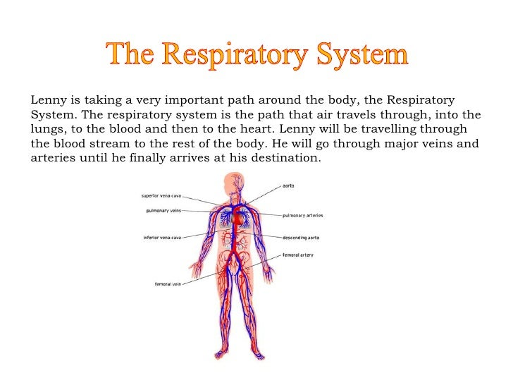 Oxygen through the Respiratory System